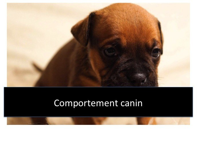 comportement canin